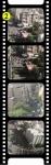 medium_film22.jpg