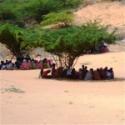 somaliatrees.125w.tn.jpg